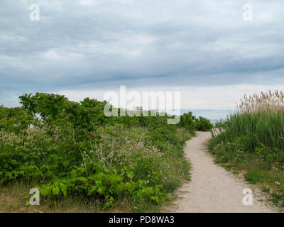 Sandy pathway on the beach with green vegetation in natural conservation area - Stock Photo