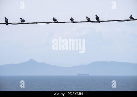 Pigeons sat in a row on a power line over the Aegean sea with the Sardonic Islands in the background and ferry sailing. East Attica, Greece, Europe. - Stock Photo