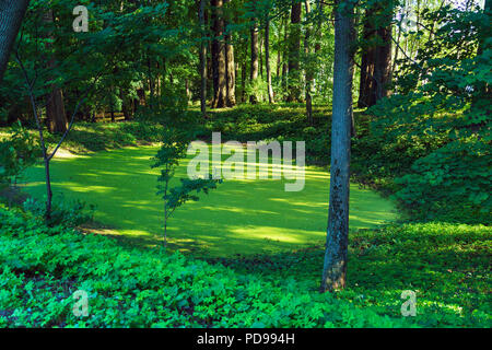 A picturesque forest landscape with a small green marsh and trees, Russia - Stock Photo