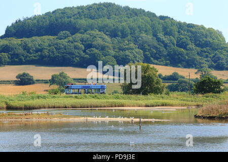 Seaton Tramway travelling through Black Hole Marsh in Seaton Wetlands Local Nature Reserve in Devon - Stock Photo