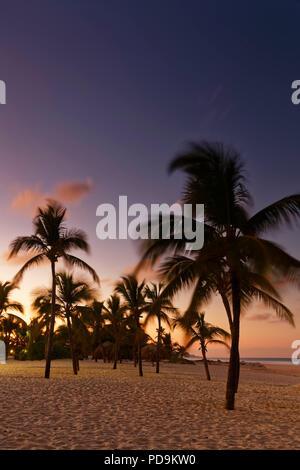 Sunset on the beach with palm trees, Playa Bavaro, Punta Cana, Dominican Republic - Stock Photo