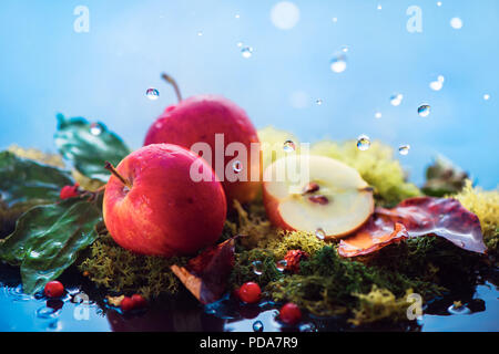 Autumn apples under rain. Fall harvest concept with copy space. Wild fruits on moss with water drops. - Stock Photo