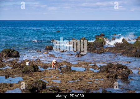 Fisherman on the rocks with an octopus he's just caught, Playa San Juan, Tenerife, Canary Islands, Spain - Stock Photo