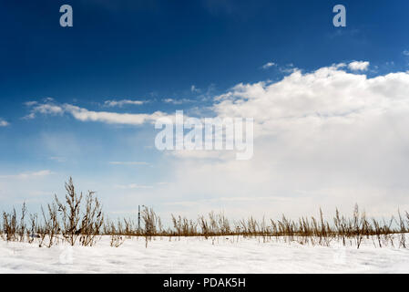 Winter snowscape of wild fields with weeds and large snow clouds and areas of blue sky with nobody in the wintry themed scene and landscape. - Stock Photo
