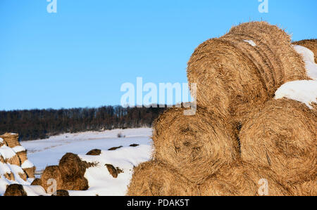 Round straw hale bays used as fodder and bedding for horses and cows stacked in rows in winter with blue-sky background and copy space area for farmin - Stock Photo