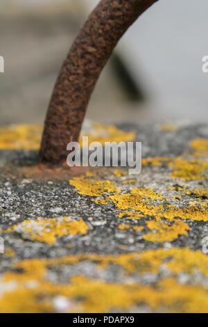 Yellow lichen on concrete bollard - Stock Photo