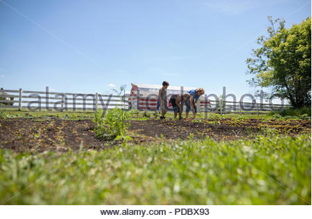 Grandmother and grandsons gardening on sunny rural farm - Stock Photo