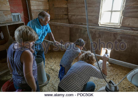 Grandparents and grandsons feeding chickens in barn - Stock Photo