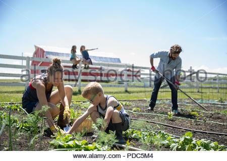 Family gardening in sunny rural garden - Stock Photo