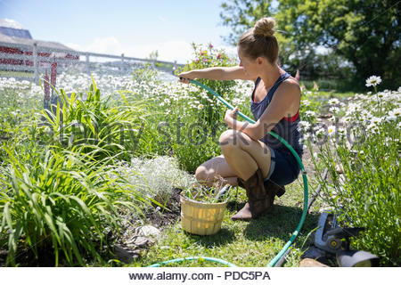 Woman gardening, watering flowers and plants in sunny rural garden - Stock Photo