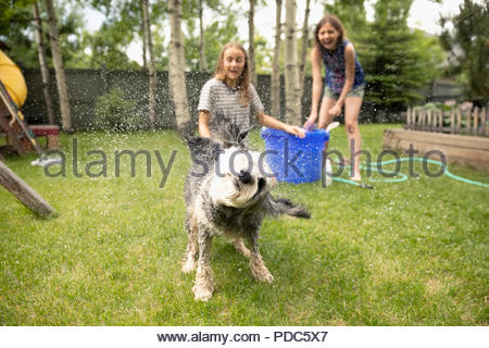 Tween girl friends giving dog bath in backyard, watching dog shaking off water - Stock Photo
