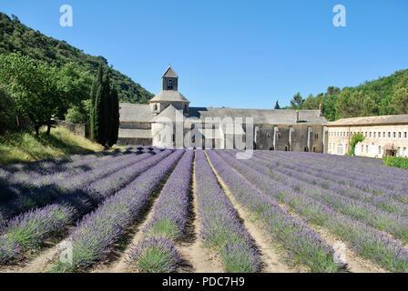 Lavender fields in Senanque Abbey