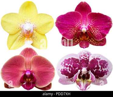 Orchids Isolated Flowers Collection Tropical Plants Set - Stock Photo