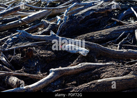 Plastic pollution in driftwood, illustrating the huge environmental problem plastic is causing in our oceans and on our sea shores. - Stock Photo