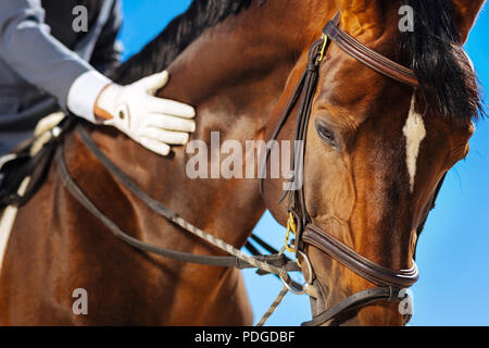 Race horse with white spot on his head standing submissively - Stock Photo