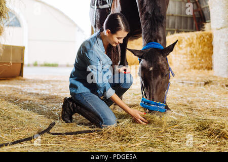 Beautiful horsewoman feeding brown horse with some straw - Stock Photo