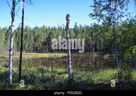 Beautiful calm and lonely lake in the forests of Dalarna - Stock Photo