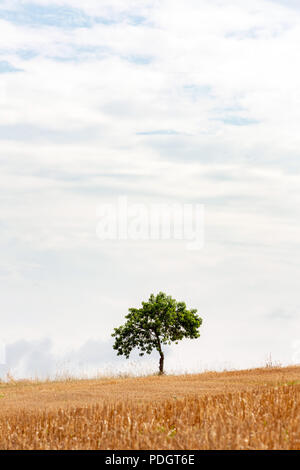 Empty minimalist landscape with one tree on the horizon - Stock Photo