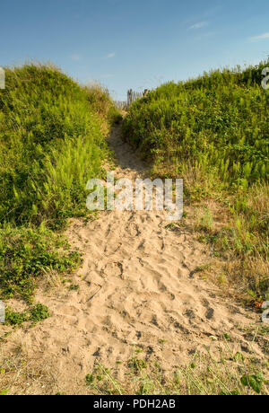 Sandy path over a sand dune with green foliage either side - Stock Photo