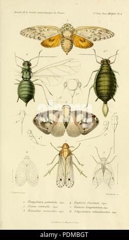 Annales de la Société entomologique de France (Pl. 4) - Stock Photo