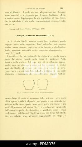 Annali del Museo civico di storia naturale di Genova (Page 611) Stock Photo