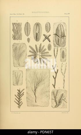 Annual Report of the Regents of the University on the condition of the State Cabinet of Natural History - Stock Photo