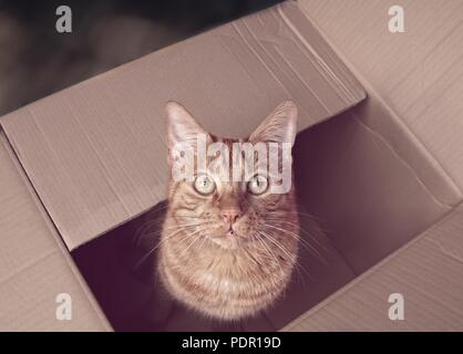 Cute ginger cat sitting in a cardboard box and looking up to the camera. - Stock Photo