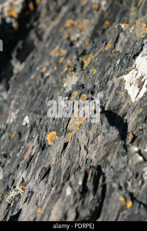 Yellow lichen growing on rocks in Scotland, Dumfries and Gallowa - Stock Photo