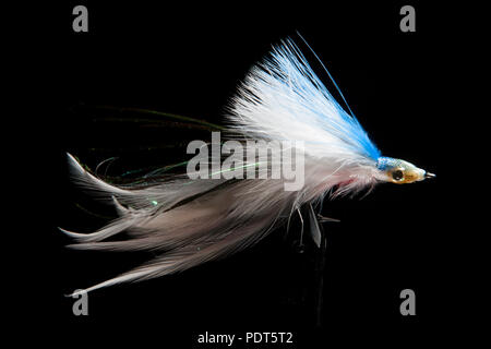 A saltwater fly, held in a fly vice, designed for catching predatory saltwater fish on a black background. Dorset England UK GB - Stock Photo