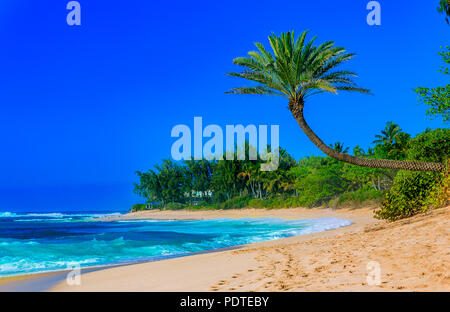 Palm tree hanging over a tropical lagoon beach with blue sky - Stock Photo