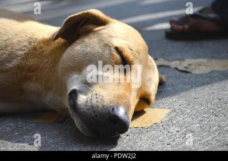 Stray dog sleeping on the streets of mumbai - Stock Photo