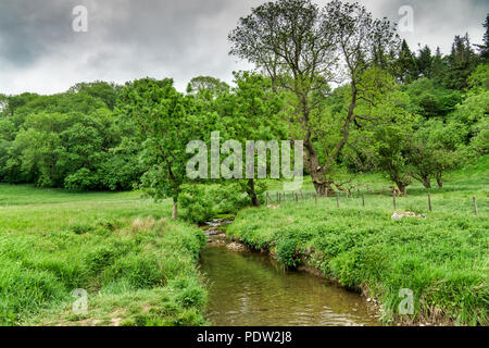 A stream flowing through lush, green countryside. - Stock Photo