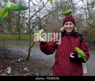 A lady with wild parakeets on her head and arms smiles as she offers them apple to eat at Kensington Gardens, London, UK. Trees in background. - Stock Photo