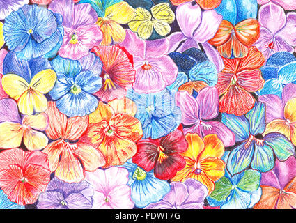 Hand drawing with watercolor pencils flowers of violets of different colors in the background - Stock Photo