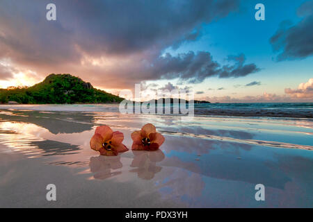 Two flowers on the beach, Anse Volbert, Seychelles - Stock Photo