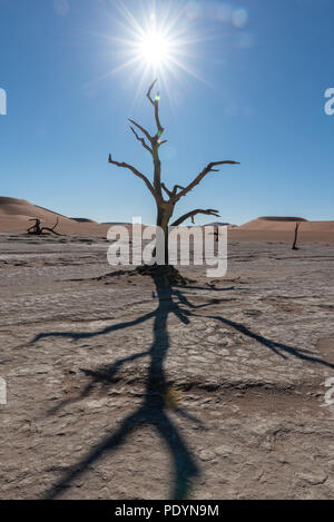 Midday sun star in dead vlei in Namib desert,  Sossusvlei, Namib Naukluft National Park Namibia - Stock Photo