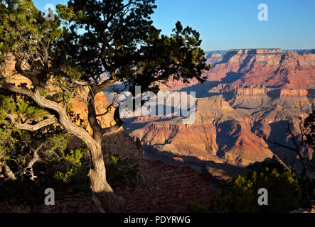 AZ00258-00...ARIZONA - View of the Grand Canyon from Navajo Point in Grand Canyon National Park. - Stock Photo