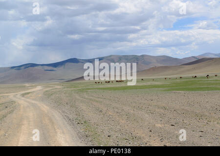 Camels in the distance on the steppe of Mongolia - Stock Photo