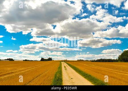 Die Wiesenrunde zaubert den Wanderer in eine Märchenwelt. Hafer-Feld an Sommertag - Stock Photo