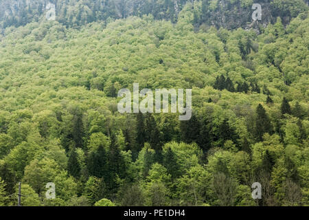 View of green trees at foothill of Mount Titlis from cable car from Engelberg, Switzerland, Europe in foggy misty morning, - Stock Photo