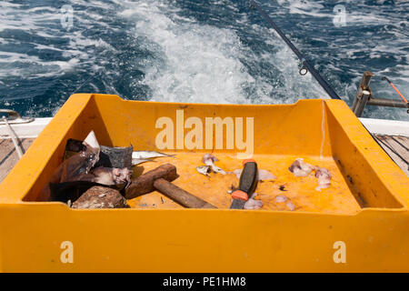 Yellow box with squid and fish heads. Bait for fishing. Hammer and knife. - Stock Photo