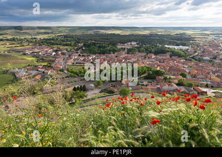 Peñafiel, Spain: Wildflower super bloom covers the ridge near Peñafiel Castle. Fields of poppies sprouted in the region after a wet spring ended month - Stock Photo