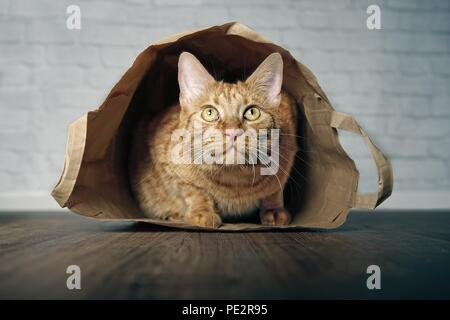 Cute ginger cat lying in a paper bag and looking curious upwards. - Stock Photo