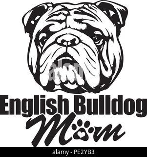 English Bulldog Breed Pet Puppy Isolated Head Face - Stock Photo