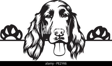 Irish Setter Dog Breed Pet Puppy Isolated Head Face - Stock Photo