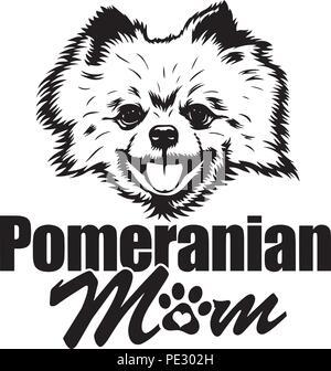 Pomeranian Dog Dog Breed Pet Puppy Isolated Head Face - Stock Photo