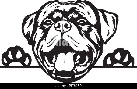 Rottweiler Rotty Dog Breed Pet Puppy Isolated Head Face - Stock Photo