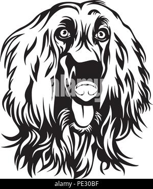 Afghan Hound Dog Breed Pet Puppy Isolated Head Face - Stock Photo