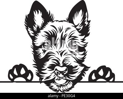 Cairn Terrier Dog Breed Pet Puppy Isolated Head Face - Stock Photo
