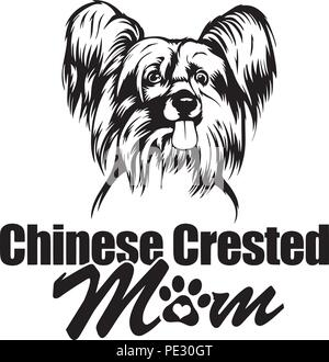 Chinese Crested Dog Breed Pet Puppy Isolated Head Face - Stock Photo
